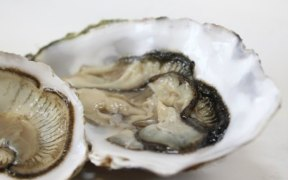 WORLD'S FIRST SHELLFISH TRACEABILITY