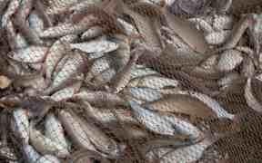 WWF - UNCLEAR EU FISHING