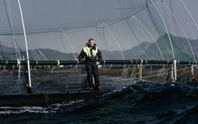 GREIG SEAFOOD COMMITS TO STOP