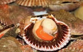 patrols-monitor-scallop-fisheries