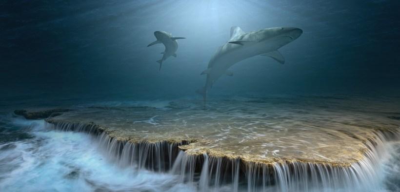 no-take-marine-reserves-can-reverse-shark-decline