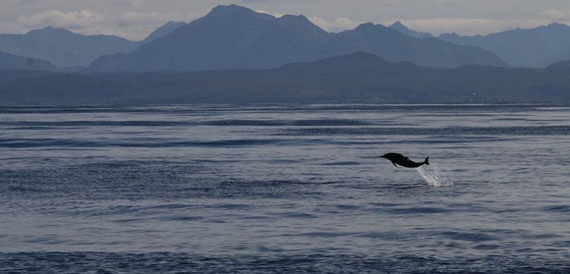 Citizen science to protect Scottish whales and dolphins