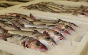 Concerns raised over approach to sustainability of fish stocks
