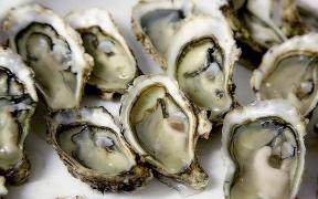 First oyster FIP launches in Japan