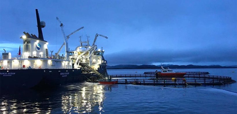 Salmon released into Atlantis submersible pen