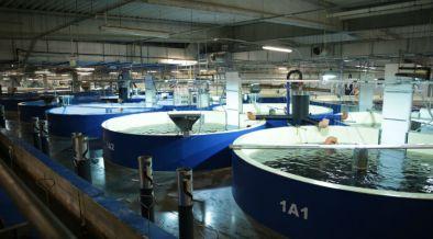 pure-salmon-achieves-sustainability-endorsement