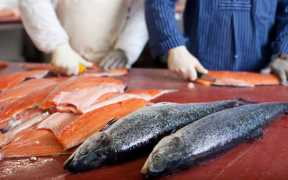 SUPPORT FOR SCOTS SEAFOOD