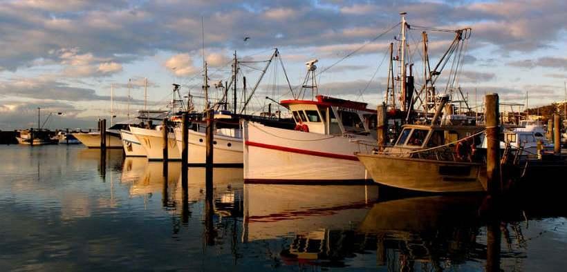 australian-seafood-industry-buoyed
