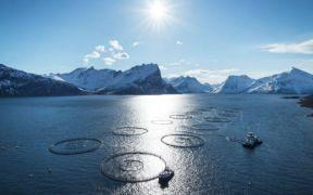 norwegian-seafood-exports-increase