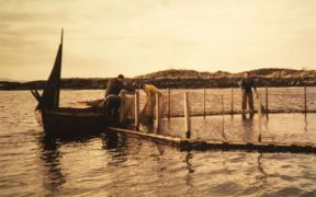 celebrating-50-years-of-modern-aquaculture