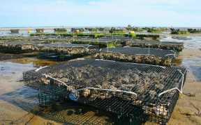 scottish-aquaculture-funding-boost