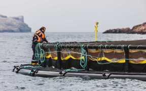 SCOTTISH SEA FARMS TO REPAY