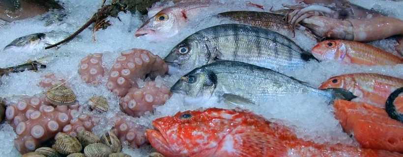 POPULAR SEAFOOD SPECIES