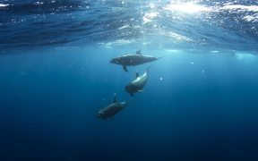 EC must stop France and Spain from killing thousands of dolphins, warn NGOs