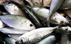 ISSF report - innovation could reduce bycatch in tuna fisheries