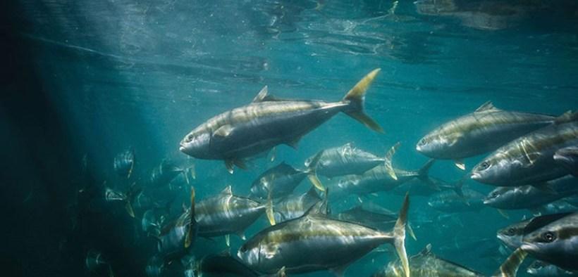 The Kingfish Company
