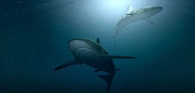 CONSERVATIONISTS WELCOME NEW SHARK OBSERVATION