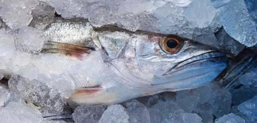 NAMIBIAN FISHERY SECOND IN AFRICA