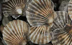 NOAA FISHERIES SCIENCE HELPS