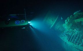 large-predatory-fish-thrive-on-wwll-shipwrecks