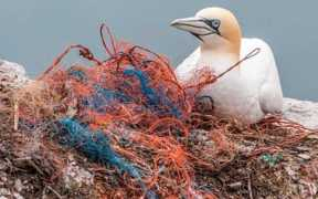 CANADA REMOVES GHOST GEAR