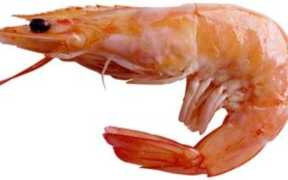 NATURALSHRIMP FORMS JOINT VENTURE