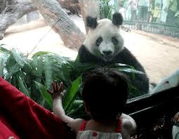Horses threatening pandas