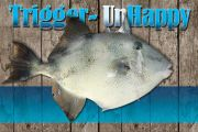 Trigger-Unhappy: How A Fish Goes From Unwanted To Endangered