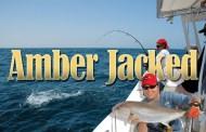 Amber Jacked