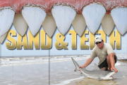 Sand and Teeth:  Catching Sharks from Shore