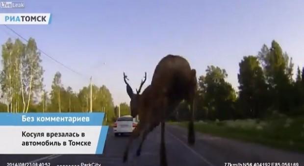 deer-620x339