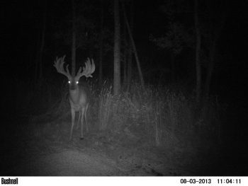 Mark Lee Buck, Game Cam