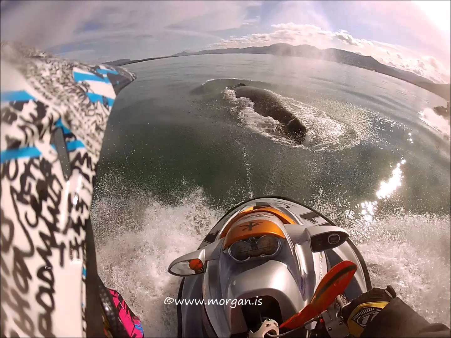 Jet Skier crashes into humpback whale, catches dramatic moment on camera (Video)