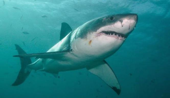 shark-attack-hunt-665x385