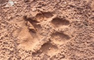 Tiger Island Sanctuaries?