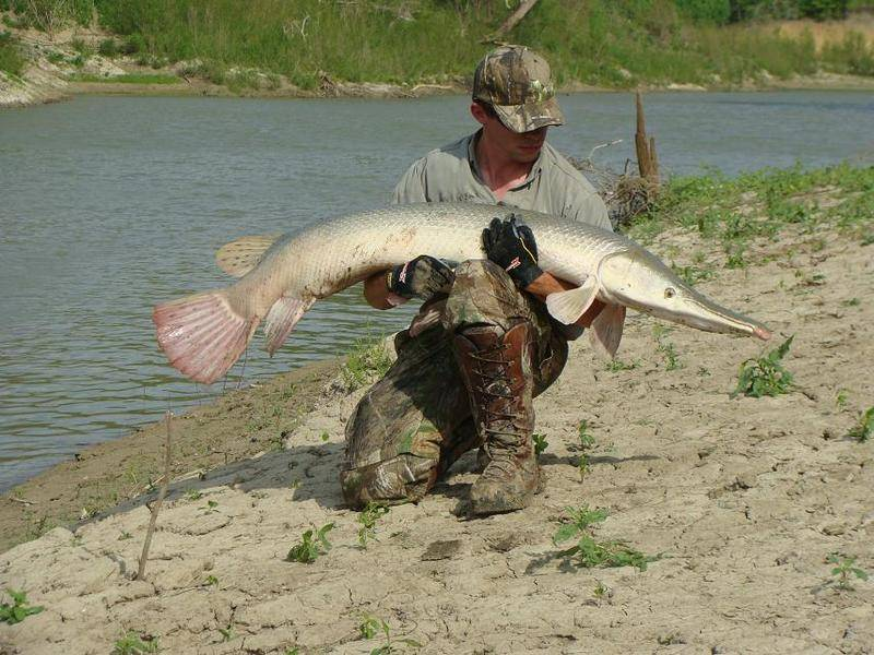 Tpwd reopens alligator gar fishing on trinity river for Texas game and fish
