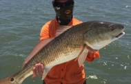 Redfish - Baffin Bay