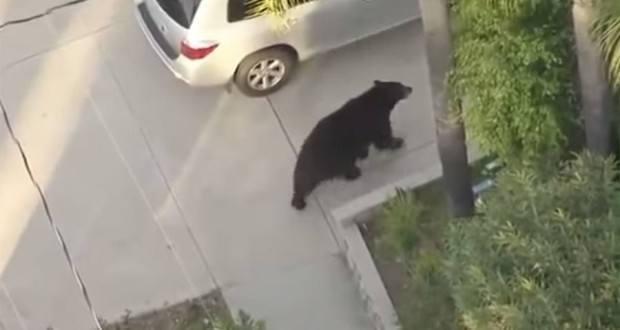 Guy texting bear