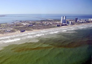 Red tide cell concentrations around South Padre Island.