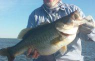 T-Bend big bass