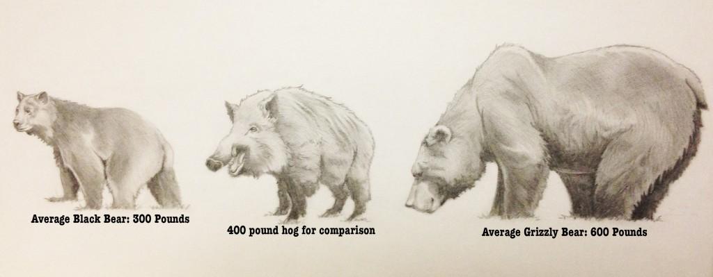 hog-comparison