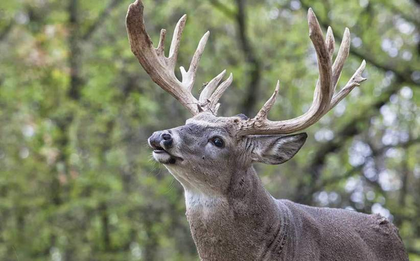 Go Organic for Whitetail