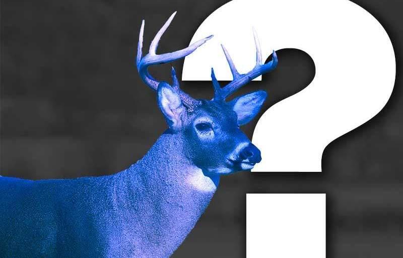 Blue Deer?
