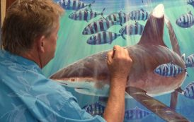 Guy Harvey and the Gulf's missing shark