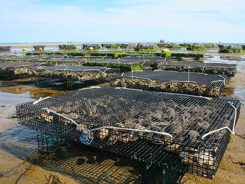 TPWD Closing Oyster Harvest in an Additional Area of Matagorda Bay