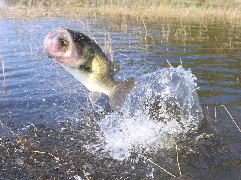 Tpwd proposes changes to 12 public lake largemouth bass for Texas freshwater fishing license