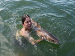 swimming with cobia