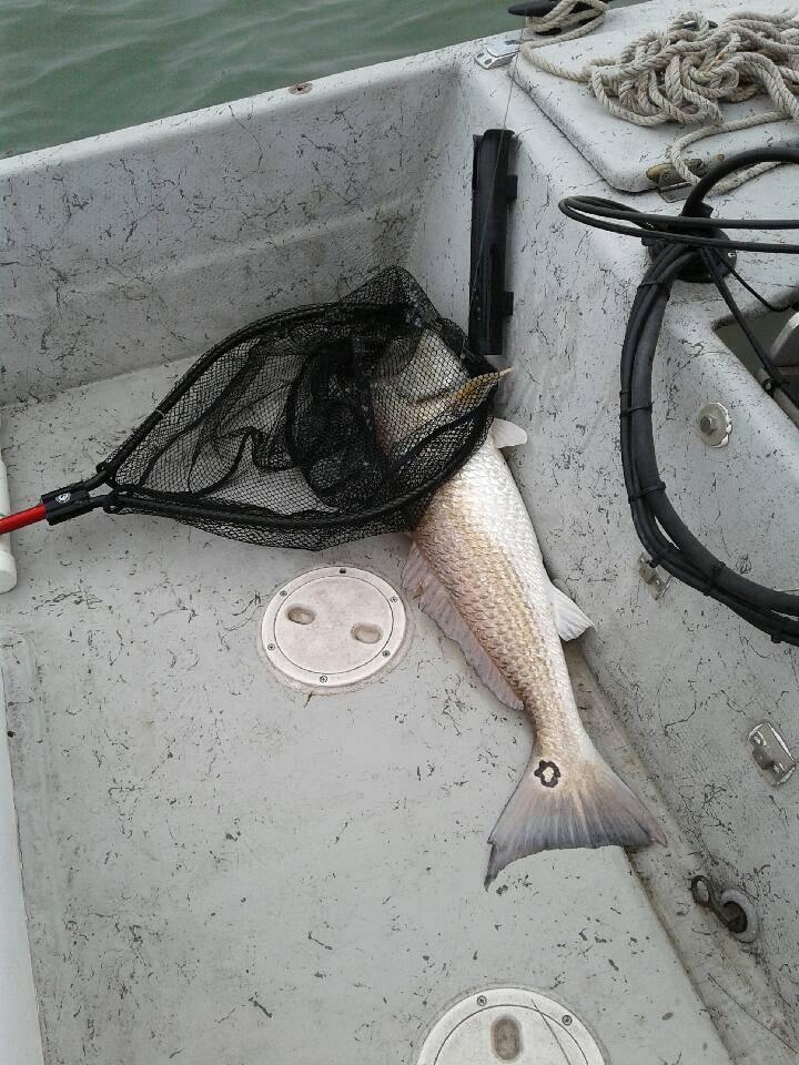 Red Fishing