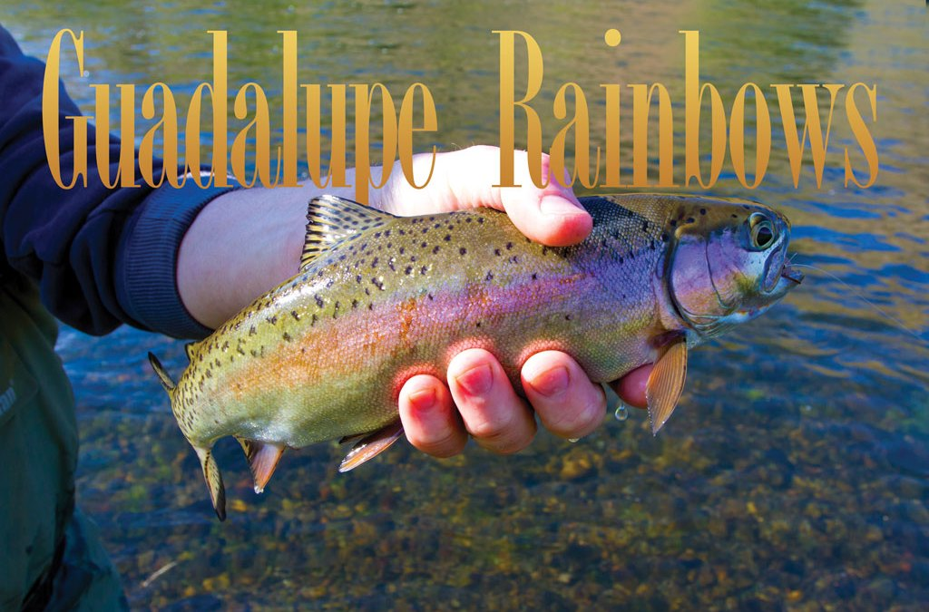 Texas rainbow trout