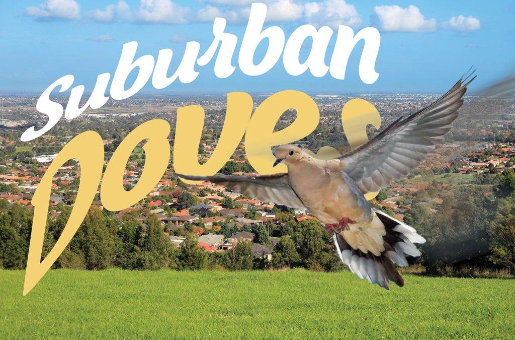 suburban dove